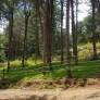 예쁜 숲길을…
